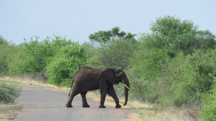IMG_4597 elephant 2019-11-22 8-21-13 AM