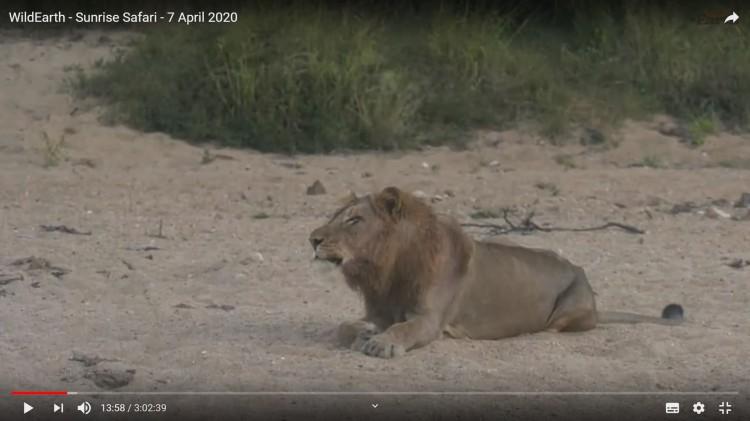 Lion screen shot